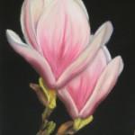 Magnolia pastelkrijt