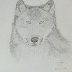 2013 wolf